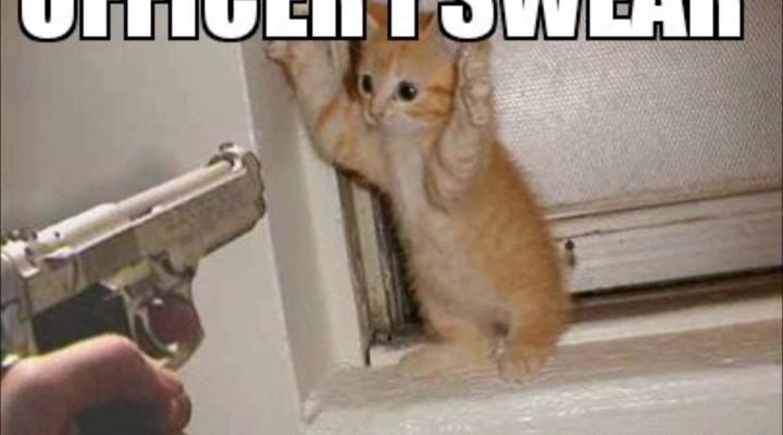 Best of Funny Cat Memes!