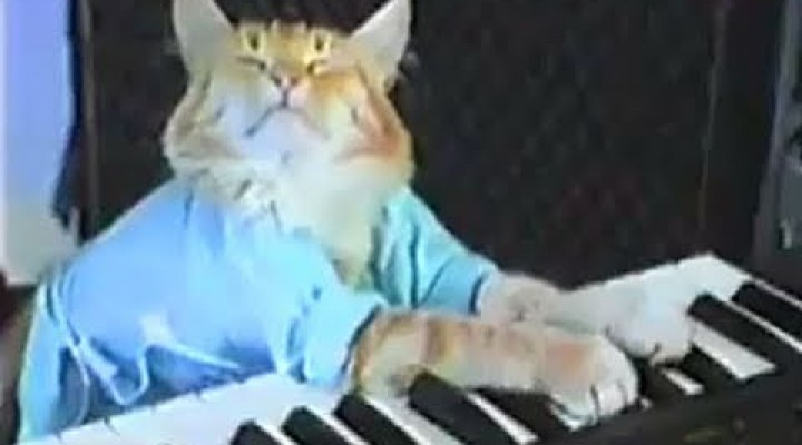 Charlie Schmidt's Keyboard Cat! – THE ORIGINAL!