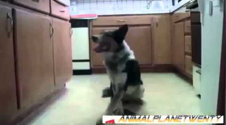 Funny Animals – Smart Dogs Video | Animal Funny Video