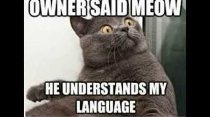 Funny Cat Memes | 2014 | Animal Memes