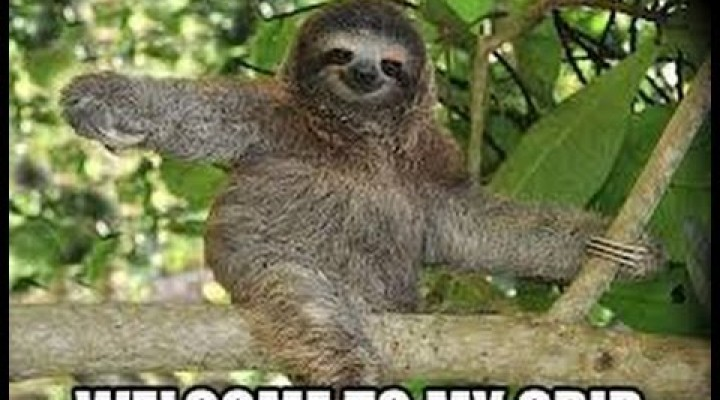 Funny Sloth Memes | 2014 | Animal Memes