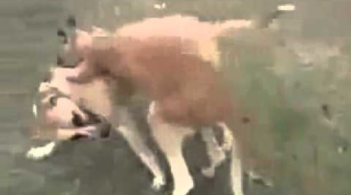 Funny Video | Kangaroo Vs Dog