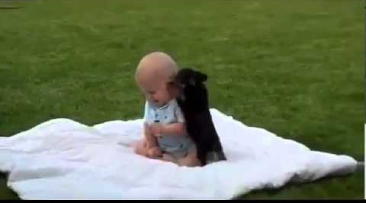 Funny Videos – Cute Funny Videos of Dog vs Baby FIGHT
