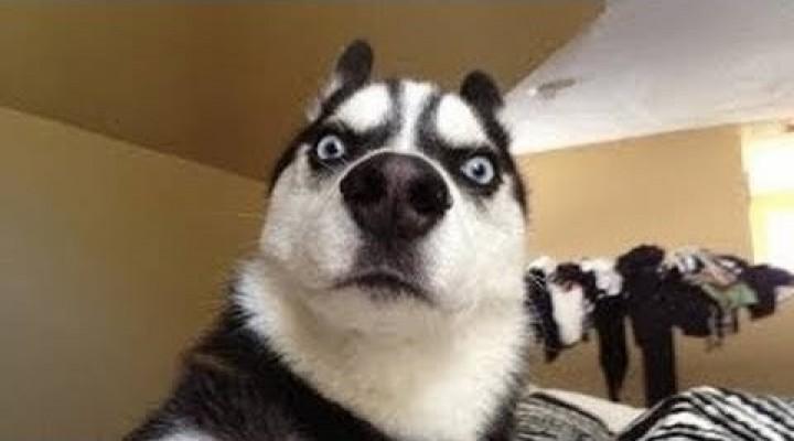 *NEW* Best Dog VINE Compilation – Best VINES 2014 – Funniest VINE Compilation – Funny Vines