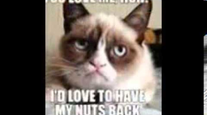Funny Memes For Good Morning : Morning archives the meme planet