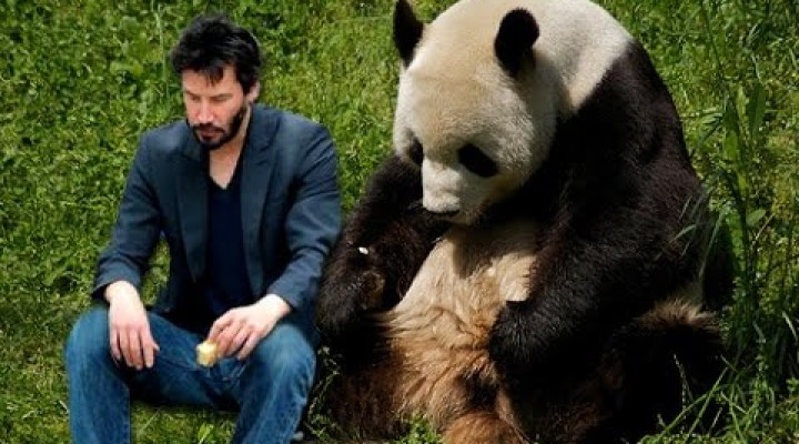 Russia Ban MEMES! No more Sad Keanu or Grumpy Cat??